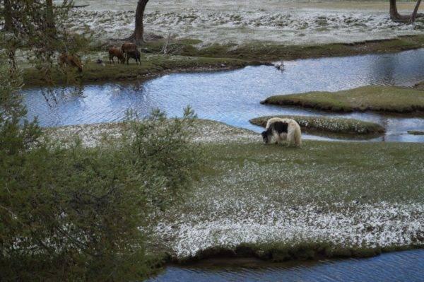 Монголия большое путешествие 5 день